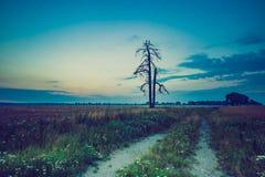 Weinlesefoto von den Störchen, die auf altem verwelktem Baum sitzen Stockfotos