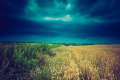 Weinlesefoto von Sturmwolken über Weizenfeld Stockbild