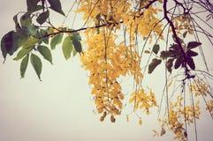 Weinlesefoto von Waschbärblumen Lizenzfreies Stockbild