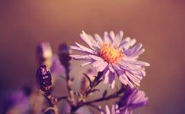 Weinlesefoto von Wildflower auf einem taunassen Morgen Stockfotos