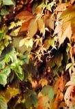 Weinleseherbst-Gartengefühl Stockfoto