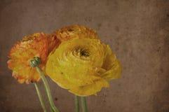 Weinlesehintergrund mit Blumen Stockfotos