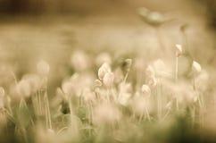 Weinlesehintergrund mit Blumen Stockfoto