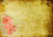 Weinlesehintergrund mit einem hibiskus Stockfoto