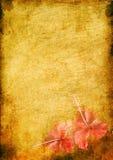 Weinlesehintergrund mit einem hibiskus Stockbilder