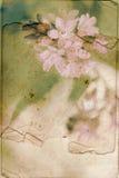 Weinlesehintergrund mit Frühlingsblumen stockbild