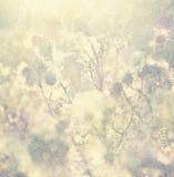 Weinlesehintergrund mit Naturelementen Stockfoto