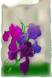 Weinlesekarte mit Iris lizenzfreie abbildung