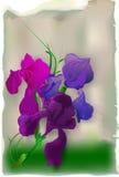 Weinlesekarte mit Iris Stockfoto