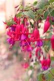 Weinlesekarte mit rosa Blumen über dem bokeh Hintergrund Stockfoto