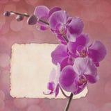 Weinlesekarte mit rosafarbener Orchidee Lizenzfreie Stockbilder