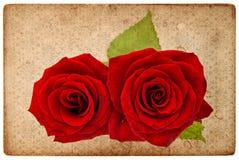 Weinlesekartenbrett mit roten Rosen Stockbilder