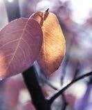 Weinlesekonzept des Herbstlaubs auf rustikalen hölzernen Brettern Stockfotos