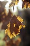 Weinlesekonzept des Herbstlaubs auf rustikalen hölzernen Brettern Lizenzfreies Stockfoto