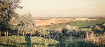 Weinleselandschaft mit blühenden Bäumen Lizenzfreie Stockfotos