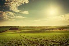 Weinleselandschaft mit grünen Feldern Stockbild