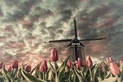 Weinleselandschaft mit Tulpenfeldern und Windmühle stockbilder