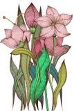 Weinleselilienblumen, Tintenzeichnung Stockfotos
