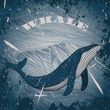 Weinleseplakat mit Wal auf Marineschmutzhintergrund Stockfotografie
