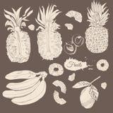 Weinlesesammlung verschiedene Früchte Ganze und geschnittene beige elemets auf dunklem Hintergrund Hand gezeichnete Skizze lizenzfreie abbildung