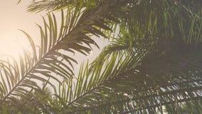 Weinleseschattenbildpalmblatt-Niederlassungsbaum in der Natur für Hintergrund Stockfoto