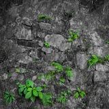 Weinleseschmutzbacksteinmauer Stockfoto