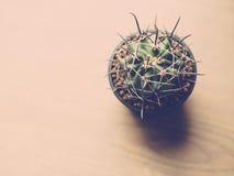 Weinleseton des Kaktus Lizenzfreie Stockbilder