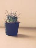 Weinleseton des Kaktus Stockfoto