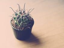 Weinleseton des Kaktus Stockfotos