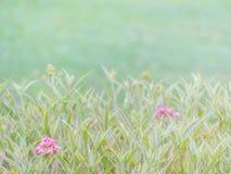 Weinleseton von Blumen und von undeutlichem Naturhintergrund Stockbild