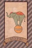 Weinlesezirkusillustration, Elefant Lizenzfreie Stockfotografie