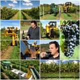 Weinproduktion Stockbild