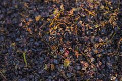 Weinproduktion Technologie der Weinproduktion stockbild