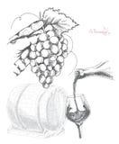 Weinproduktion, Vektorillustration Lizenzfreies Stockfoto