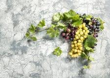Weinrebe mit Grün verlässt Steinhintergrund Lizenzfreie Stockfotografie