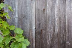 Weinrebeblätter Stockbilder