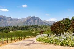 Weinreben in der schönen südafrikanischen Landschaft Lizenzfreie Stockfotos