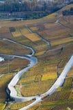 Weinstöcke auf den Steigungen von Rhône-Tal in Wallis, die Schweiz stockbild