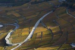 Weinstöcke auf den Steigungen von Rhône-Tal in Wallis, die Schweiz stockbilder