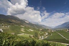 Weinstöcke auf den Steigungen von Rhône-Tal in Wallis, die Schweiz lizenzfreie stockbilder