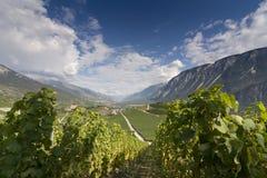 Weinstöcke auf den Steigungen von Rhône-Tal in Wallis, die Schweiz lizenzfreie stockfotografie