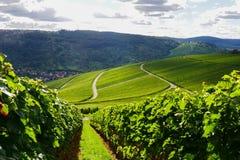 Weinstadt панорамы виноградников стоковое изображение