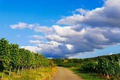 Weinstadt панорамы виноградников Стоковые Изображения