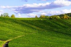 Weinstadt панорамы виноградников Стоковое фото RF