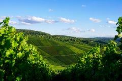 Weinstadt панорамы виноградников Стоковое Изображение RF