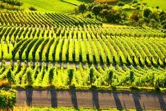 Weinstadt de panorama de vignobles Image stock