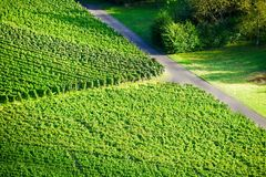 Weinstadt de panorama de vignobles Photographie stock