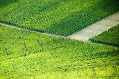 Weinstadt di panorama delle vigne Fotografia Stock