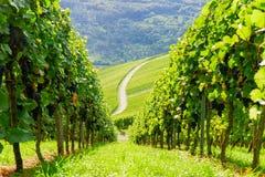 Weinstadt di panorama delle vigne Fotografie Stock