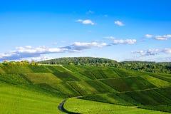 Weinstadt do panorama dos vinhedos Foto de Stock